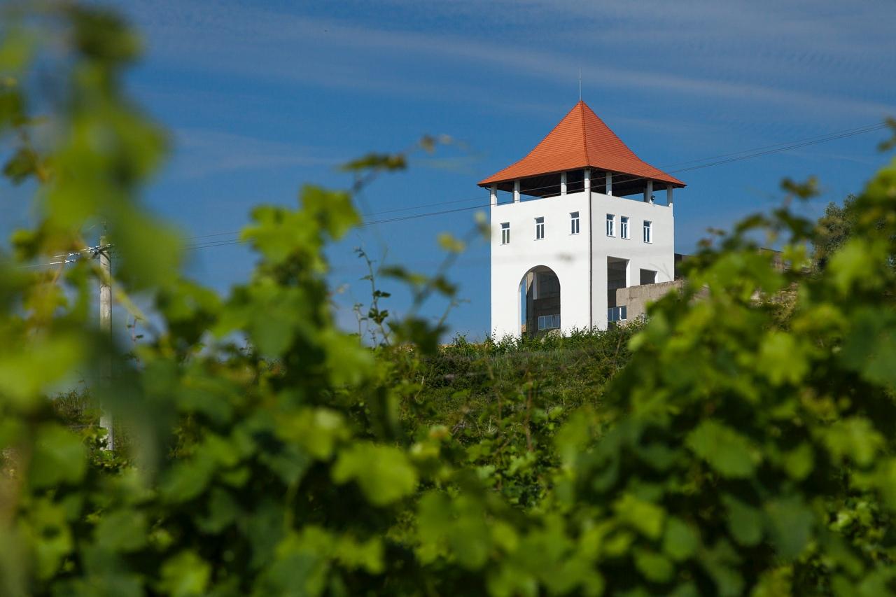 VILLA VINEA –  Istoria se scrie azi pe valea Tarnavei Mici